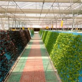 江西玻璃蔬菜温室